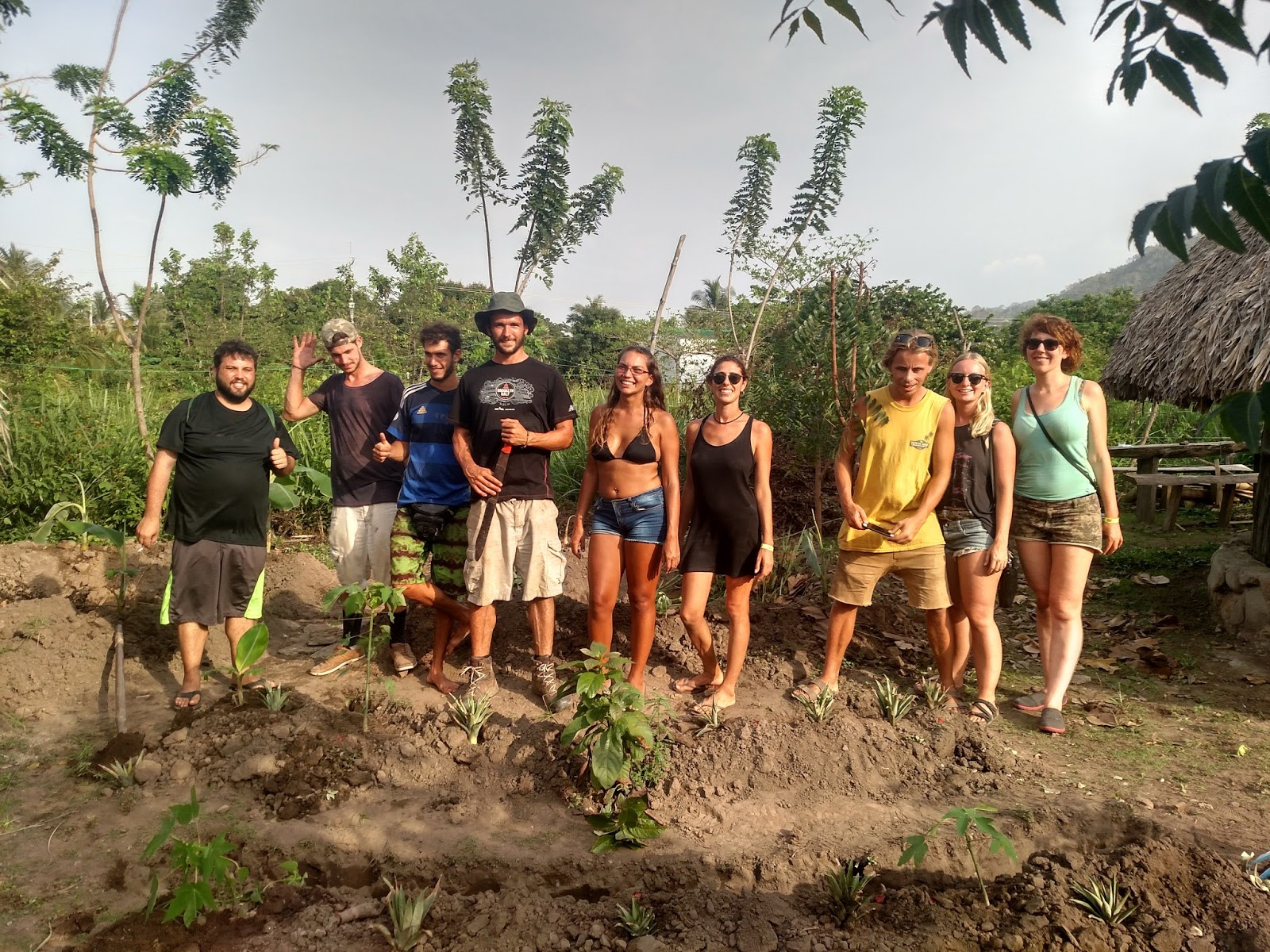 Banana Circles in Palomino - Permaculture Project I | Next Succession