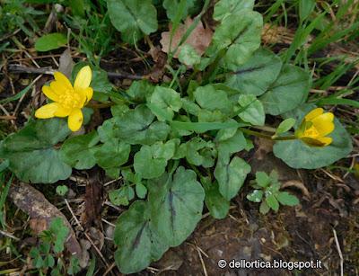orto Savigno erbe Bologna rose Valsamoggia ortica Zocca fattoria didattica