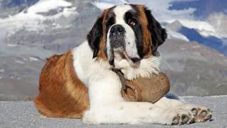 انواع الكلاب وصورها واشكالها