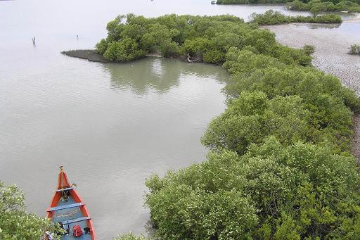 Muthupettai Mangrove Muthupet Lagoon Tamil Nadu India