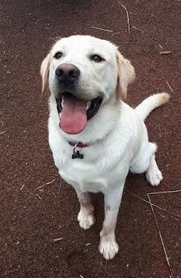 eduquer chien annecy thones ugine faverges albertville