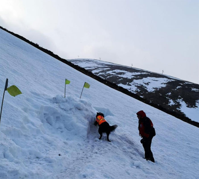 Heartwarming Video Of Mountain Rescue Dog Saving A Man Who Was Buried In Snow