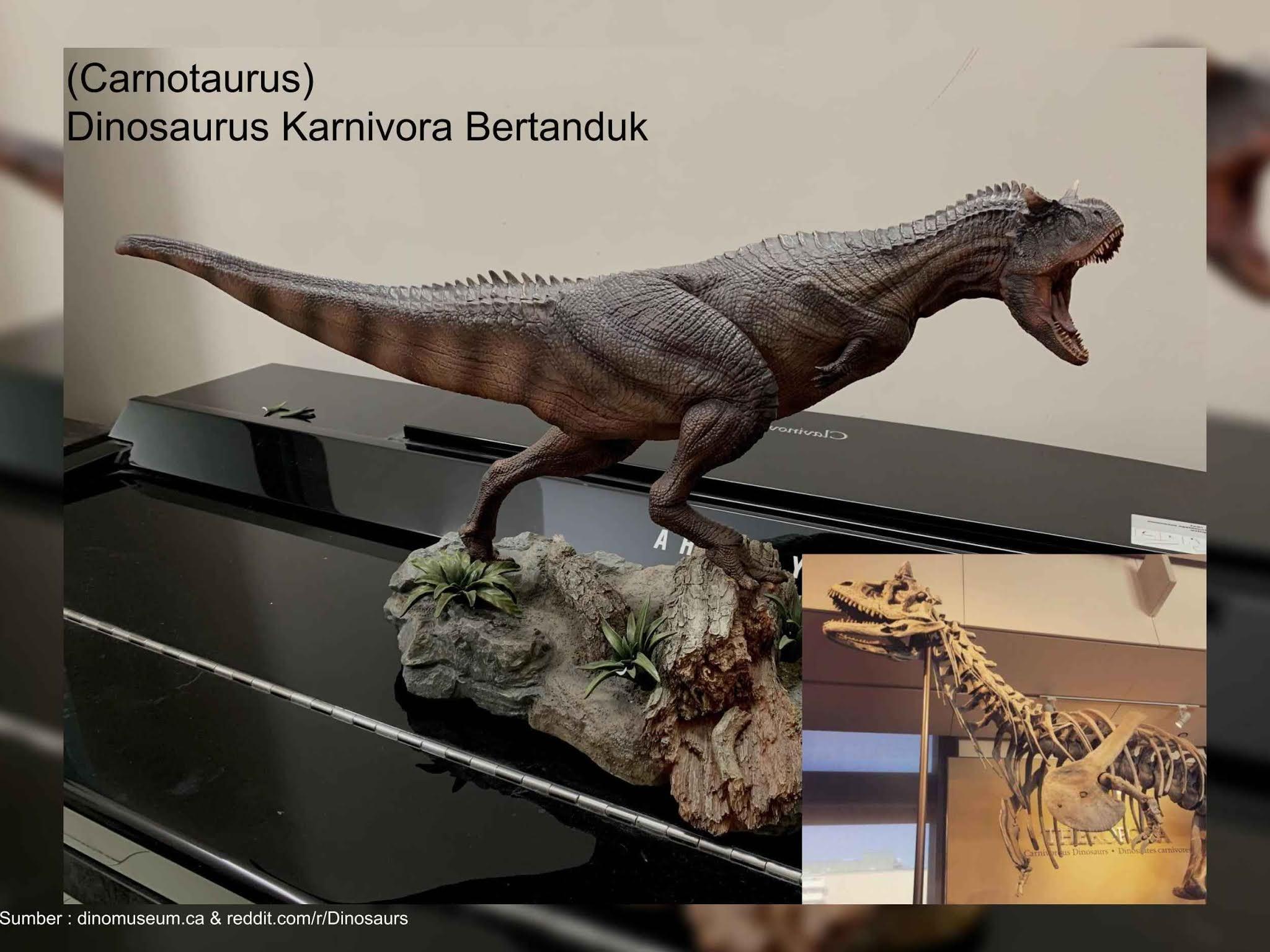 carnotaurus, dinosaurus karnivora bertanduk