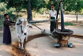 "Myanmar Traditional Oil Press Maker – ""Wooden Mortars & Pestles"""