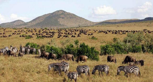 Profil Negara Kenya Keadaan Alam, Budaya, Perekonomian, Penduduk dan Bentuk Pemerintahan