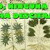 El códice Voynich ¿Han descifrado el manuscrito?