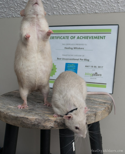 Oliver and Jasper in front of our certificate of achievement