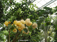 Yellow bromeliad plant - Kyoto Botanical Gardens Conservatory, Japan