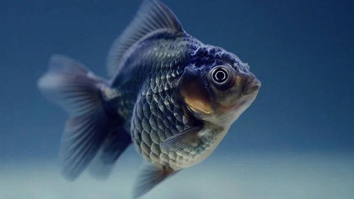 biggest fish in captivity