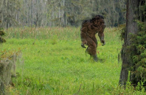 Skunk Ape Sighting Investigated Near Dade City, Florida