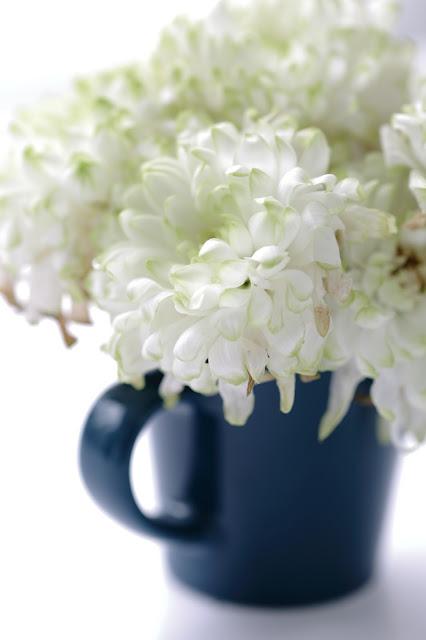 #kukkailottelua, valokuvaus, vanha kukka