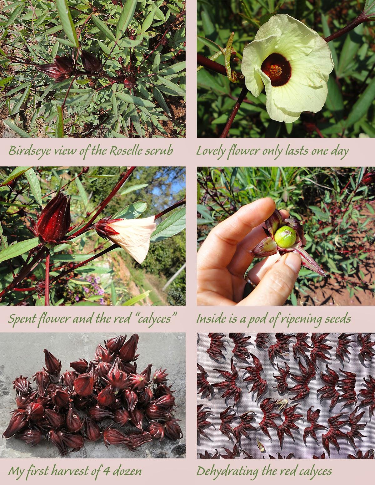 Judys Good Food Blog Grow A Zinger Of A Plant