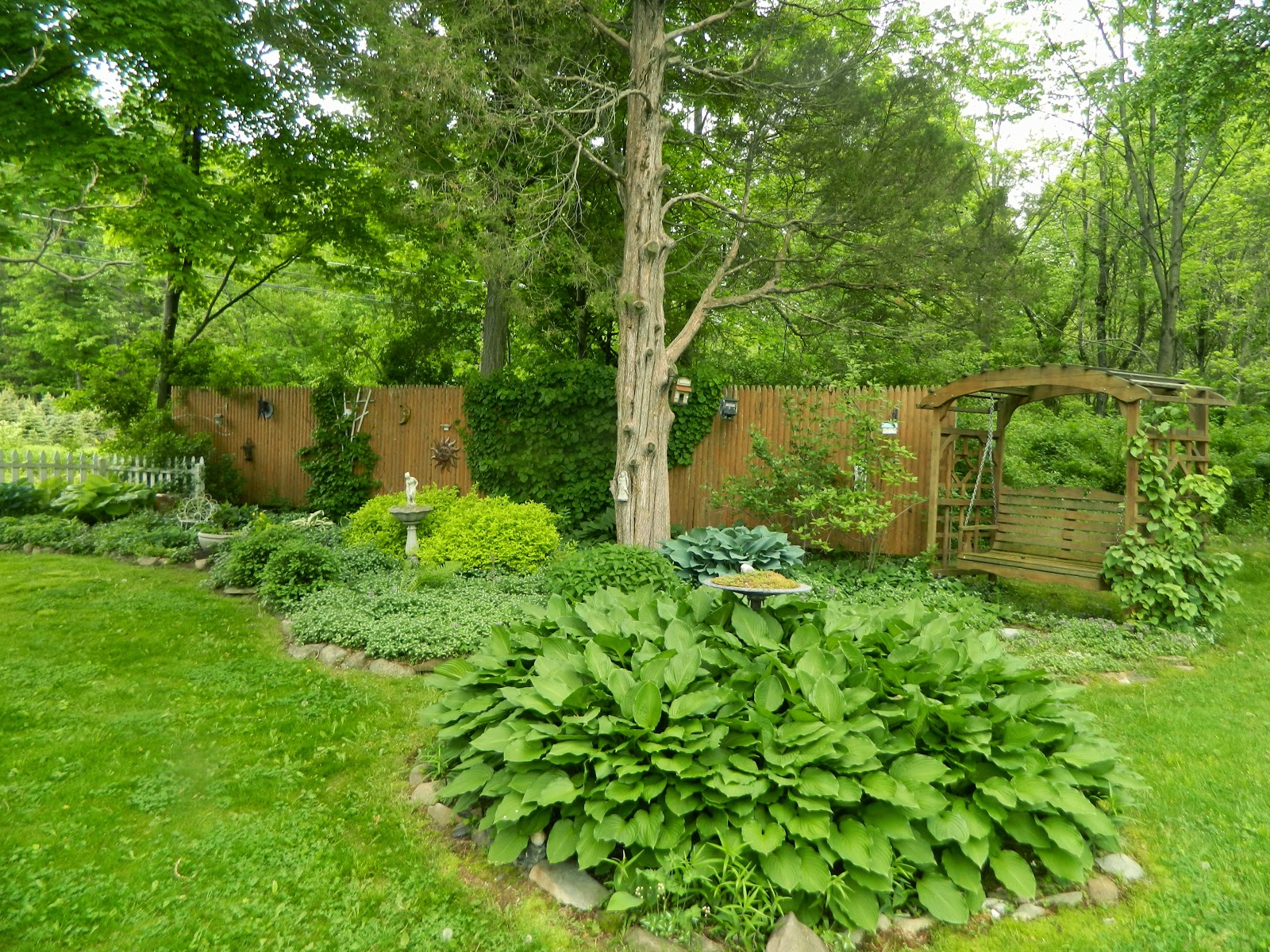 pam u0026 39 s english cottage garden  see how my garden grows