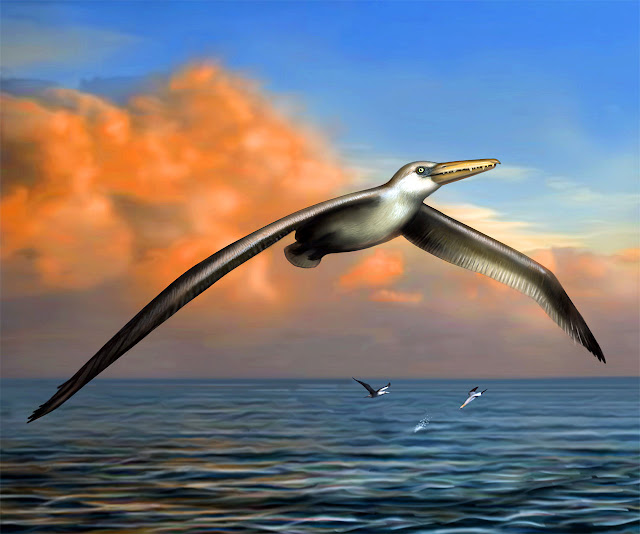 Giant prehistoric bird fossils found in Antarctica