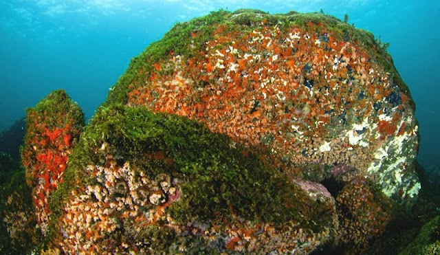 Ponto de mergulho no Paraná, as Ilhas dos Currais são também berçários importantes no Brasil e no Atlântico Sul