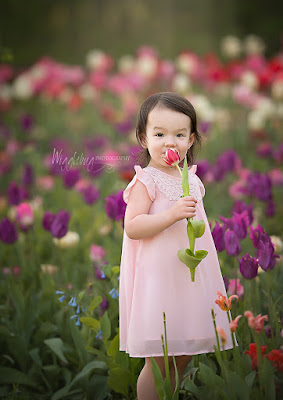 Geneva, IL Newborn and Child Photographer at Flowers on Fargo tulip field