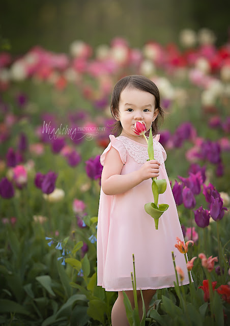 Geneva, IL Newborn and Child Photographer at Flowers on Fargo tulip field