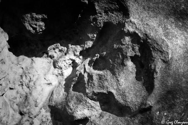 Crâne bellifontain, Forêt deFontainebleau