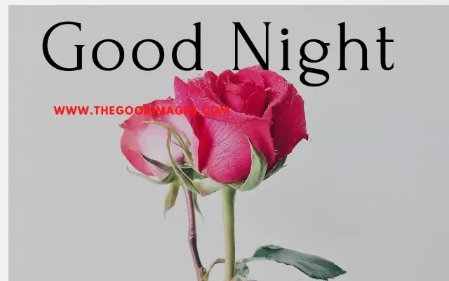 Good Night Rose Images Photos Pictures For Whatsapp