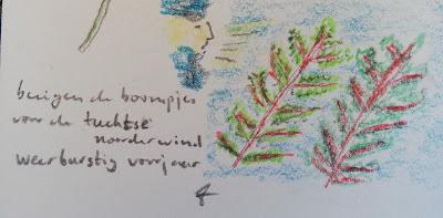 Haiku noorderwind met tekening van wind in de bomen