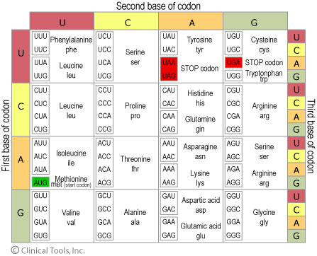 codon and amino acid relationship problems