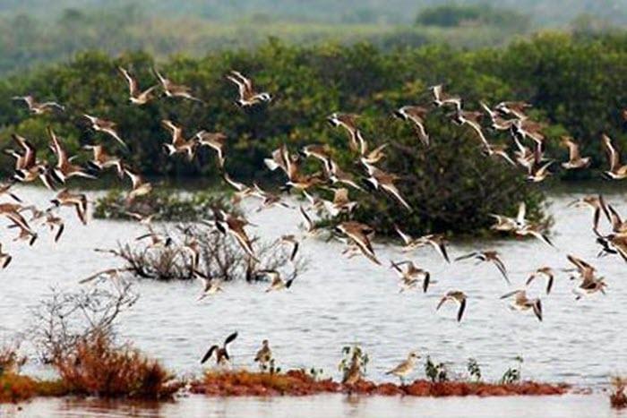 Khám phá vùng lõi khu dự trữ sinh quyển thế giới ở cửa sông Hồng -4