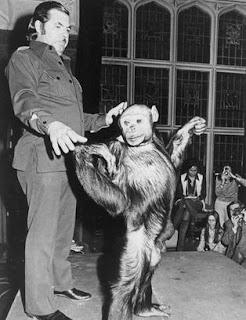 Increible! Hace 100 años vivio un Hibrido entre un humano y un chimpancé
