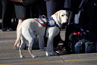 Service dog accompanies late president Bush on final farewell