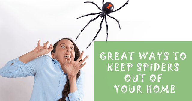 Keep Spiders Away From Your Home