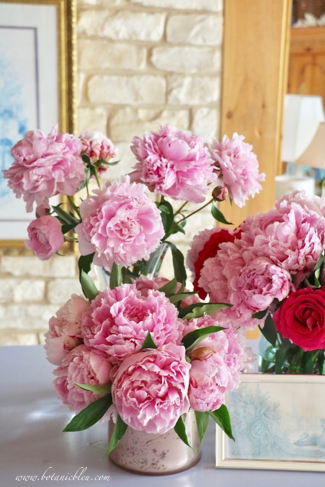 Romantic French country pink peonies add finishing touch for French inspired country living