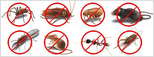 Pest Control in Keilor