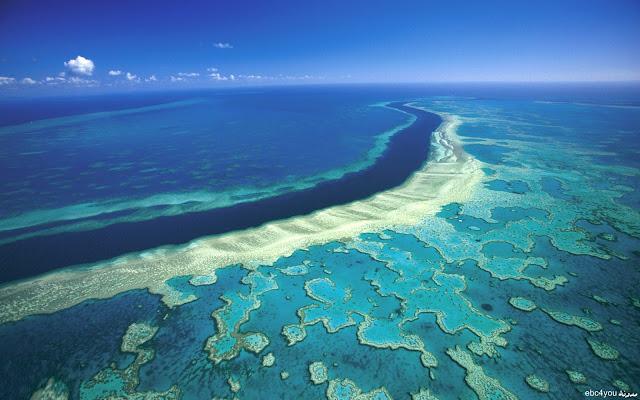حاجز الشعب المرجانية الأكبر