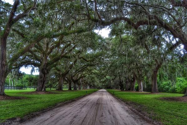 tour visita boone hall plantation una de las plantaciones mas cinematográficas de Estados Unidos