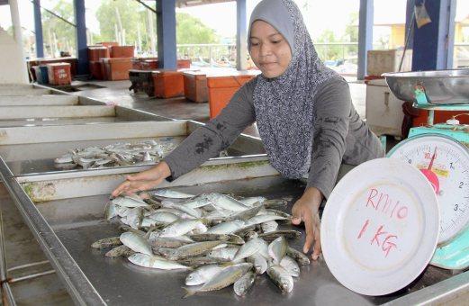 Harga Pasaran Ikan Kembong Kuala Kedah