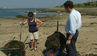 Collecting seaweed from the beach