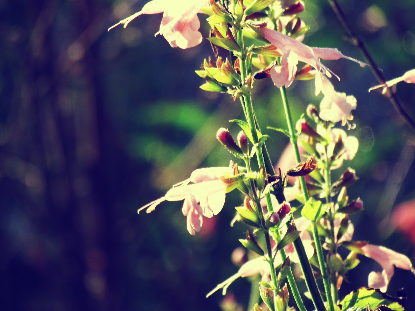 Natural pink florals and blurred photography in the pines of a butterfly meadow overlooking a bubbling brook