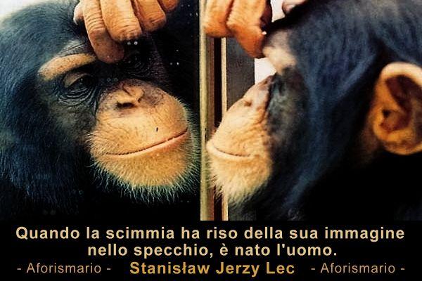 Immagini Scimmie Divertenti