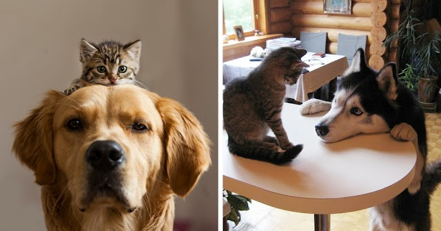 10+ Of The Times When Cats And Dogs Proved That They Can Be Best Friends
