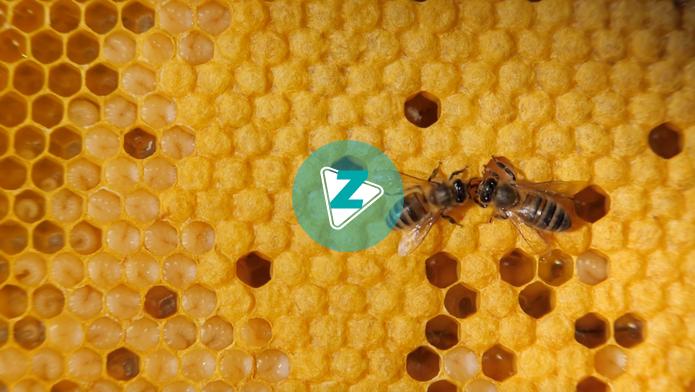 O novo estudo não significa necessariamente que as abelhas não entendam números, mas sugere que os animais usam propriedades não numéricas para resolver problemas matemáticos.