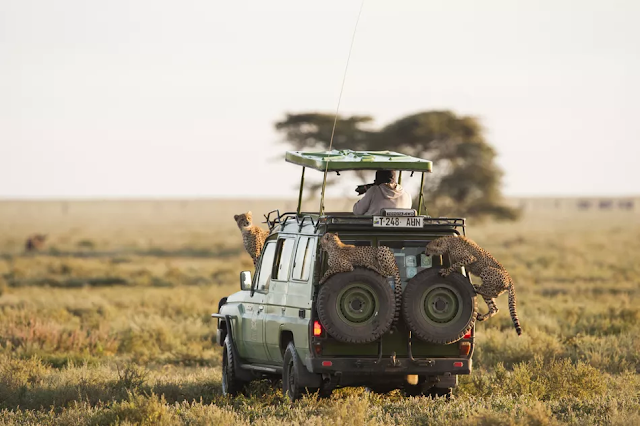 Serengeti National Park, Tanzania: the Complete Guide