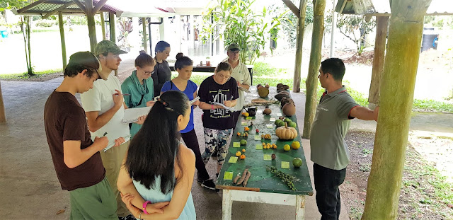 STAM students learning about tropical fruits in Costa Rica.