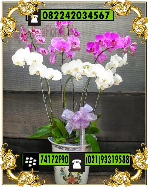 bbunga calla lily cantik dan elegant