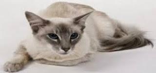 امراض ممكن ان تنقلها القطط للانسان