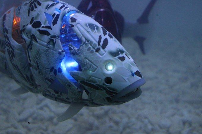 Miro fish robot