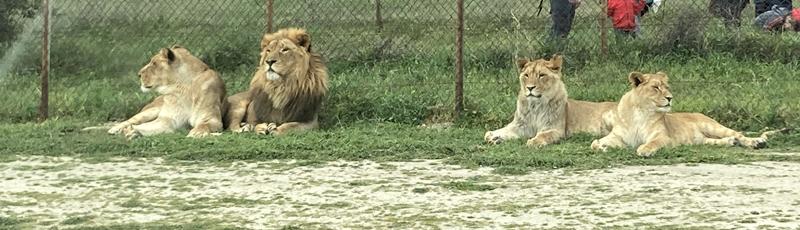 Planes en familia: Safari Madrid
