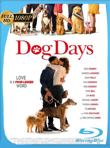 Dog Days (2018) HD 1080p Latino Dual [GoogleDrive] TeslavoHD