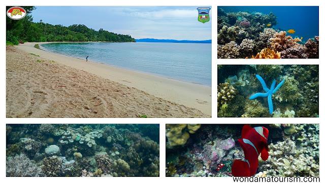 pantain dan terumbu karang di Kabupaten Teluk Wondama