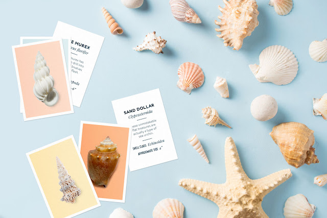 Printable Seashell Flashcards - summer activity for kids