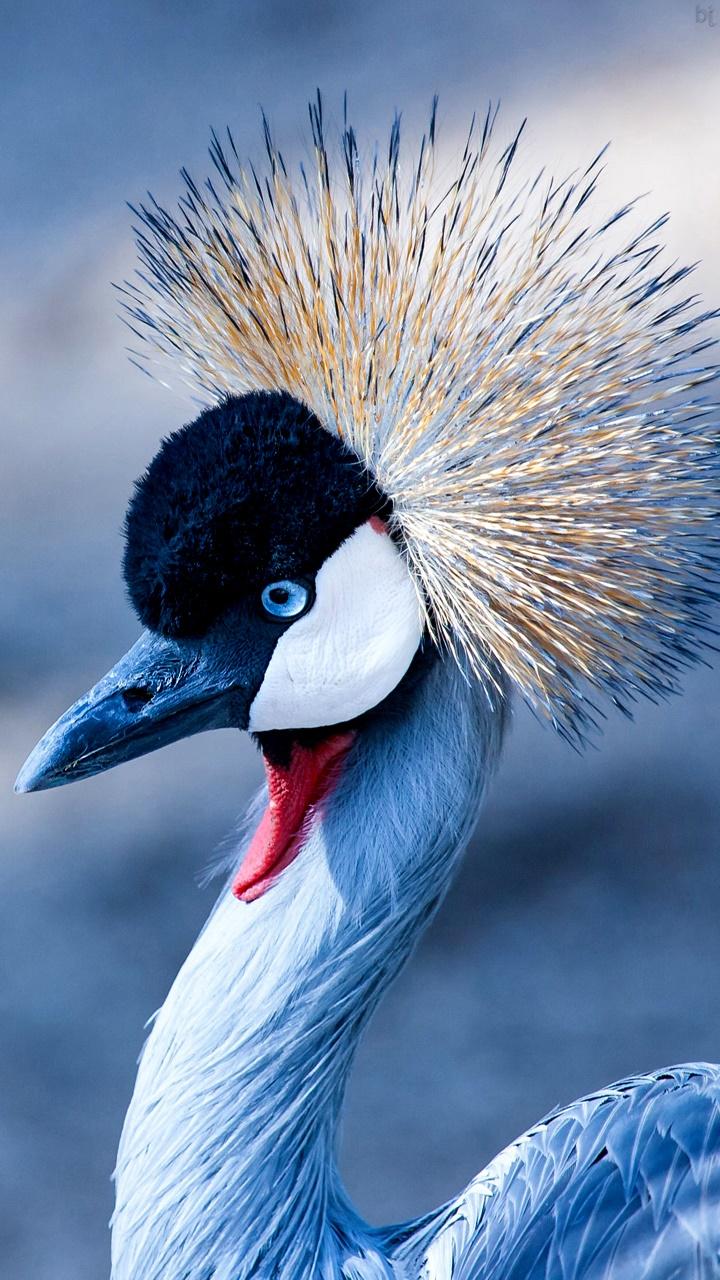 ভিবিন্ন প্রকার পাখির ছবি |পাখির ফটো ডাউনলোড
