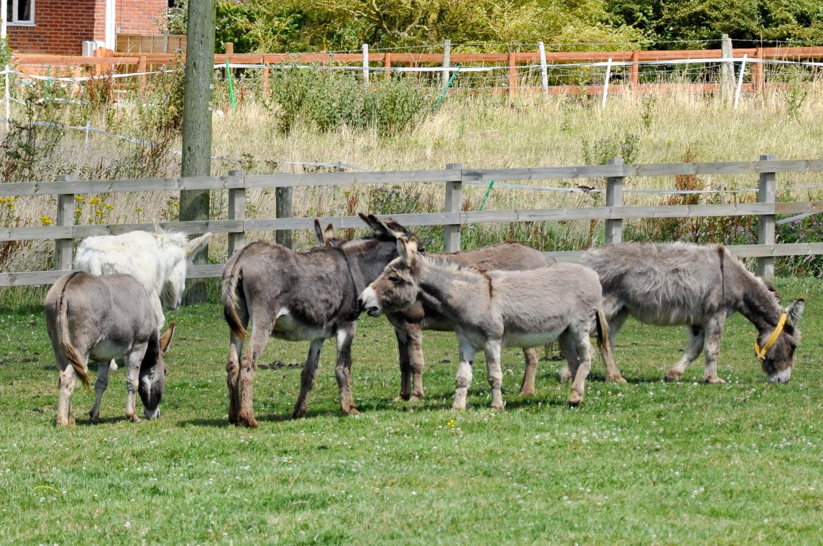 Donkeys chatting, The Donkey Sanctuary, Isle of Wight, UK